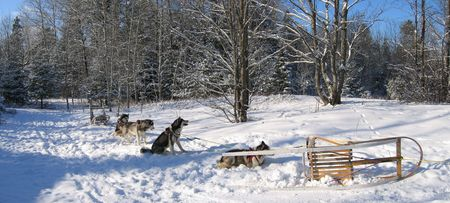 Dogs having some rest - Dogsledding - Quebec - Panorama Stock Photo - 747560