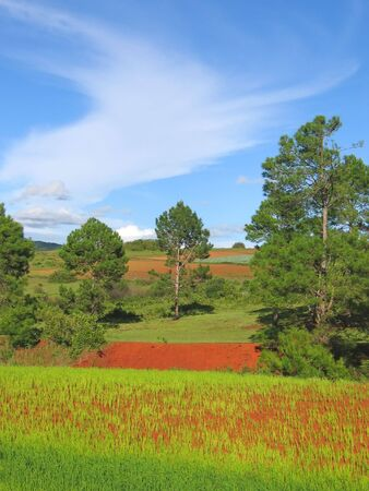 Tree and flowers of a colored countryside with red ground - Kalaw - Myanmar. photo