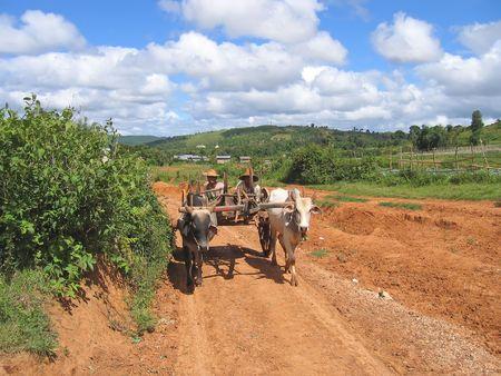 Birman farmers driving a cart - Kalaw - Myanmar. photo