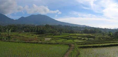 Cara ricefields - Ruteng - Flores - Indonesia - Panorama. photo