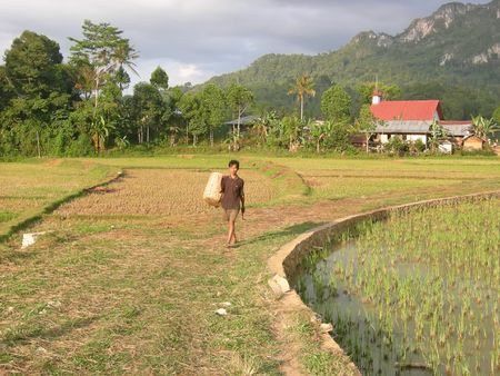Farmer coming back from work in the ricefields in Kete Kesu - Rantepao - Sulawesi island - Indonesia - Panorama. Stock Photo - 843965