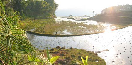 Ricefields with water - Rantepao - Sulawesi island - Indonesia - Panorama. photo