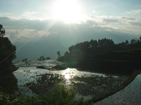 Sunset on ricefields with water - Rantepao - Sulawesi island - Indonesia. photo