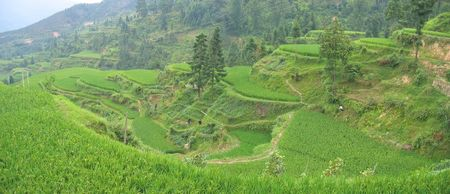 Levered ricefields on the mountains - Hunan - China - Panorama. photo
