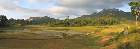 Ricefields from Londa to Kete Kesu - Rantepao - Sulawesi island - Indonesia - Panorama. Stock Photo - 852433