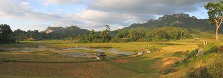 Ricefields from Londa to Kete Kesu - Rantepao - Sulawesi island - Indonesia - Panorama. Stock Photo - 852433
