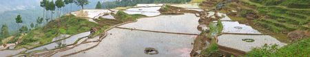 Very large view of levered ricefields with water - Rantepao - Sulawesi island - Indonesia - Panorama. photo