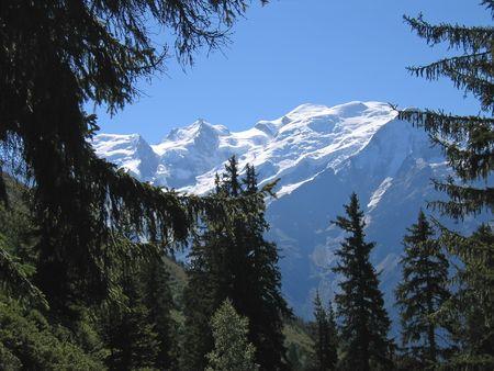 Mountains through fir trees - Aiguillette des Houches - Brevent - France - The Alps. photo