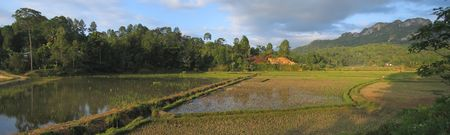 Circular ricefields from Londa to Kete Kesu - Rantepao - Sulawesi island - Indonesia - Panorama. photo