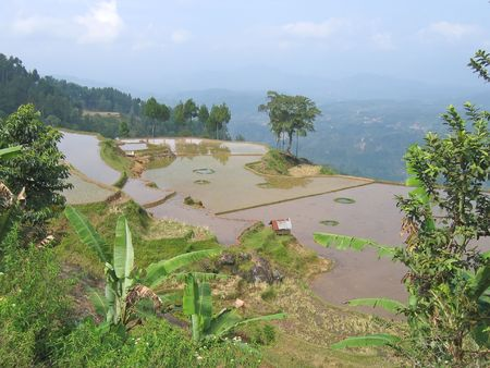 sulawesi: Ricefield on the border of the high mountains - Rantepao - Sulawesi island - Indonesia.