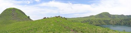 cameroonian: Some cows and buffalo on grass hills - Cameroon - Africa - Panorama.