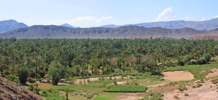 Desert oasis with palm trees and mountains behind - Zagora - Draa valley - Morocco - Panorama.