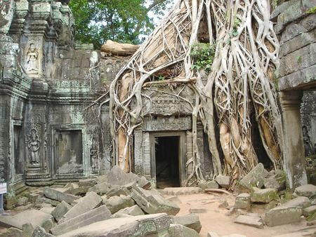 A tree over old ruin temple -  Ta Prohm - Bayon - Angkor Tom - Cambodgia. Stock Photo