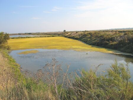 re: Yellow swamps - Re island - France. Stock Photo
