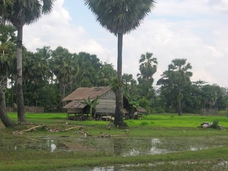 Ricefields with a farmer house in the countryside - Phnom Pen - Cambodgia. photo