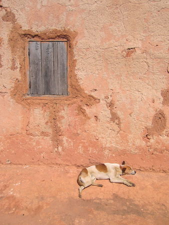 Dog sleeping along a house wall - Andringitra park - Madagascar. photo