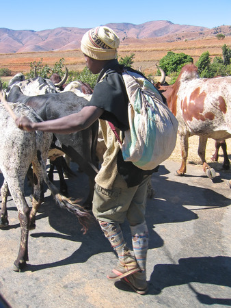 Farmer man with zebu - Ambalavao - Madagascar.