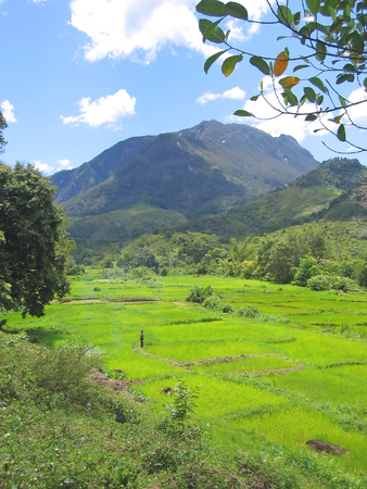 Green ricefields with mountains - Andapa - Marojejy park - Madagascar. Stock Photo