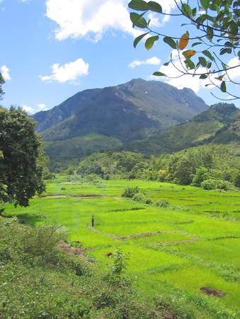 dangerous love: Ricefields verdi con le montagne - parco di Marojejy - di Andapa - Madagascar.