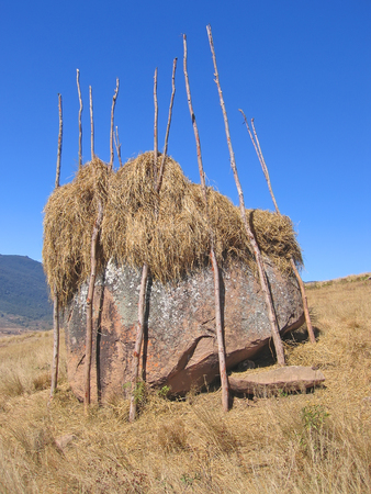 Hay drying on a rock - Andringitra park - Madagascar. photo