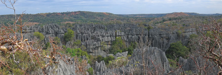 full height: Large view on the top - Tsingy of Bemaraha Park - Madagascar - Panoramique.