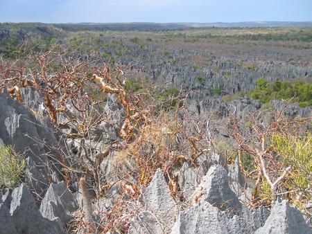 Large view on the top - Tsingy of Bemaraha Park - Madagascar. Stock Photo