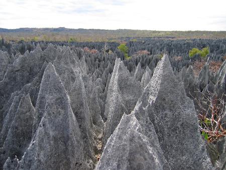 On the top - Tsingy of Bemaraha Park - Madagascar.