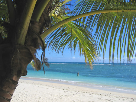 coastline: Palm tree and blue sea from Nattes island - Nosy Boraha - Sainte-Marie island - Madagascar.