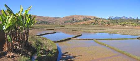 Terrace culture in the valley - Andringitra park - Madagascar - Panoramique. photo