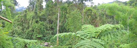 Tropical jungle - Andapa - Marojejy park - Madagascar - Panoramique. photo