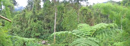 Tropical jungle - Andapa - Marojejy park - Madagascar - Panoramique. Stock Photo - 1677541