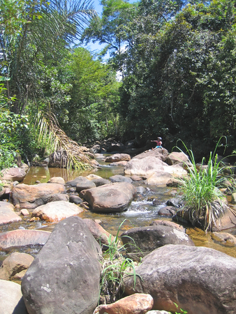 Tropical river - Andapa - Marojejy park - Madagascar. Stock Photo - 1677153