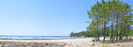 steely: Sanguinet lake with big pines along the beach in the Landes - South west France - Panorama.