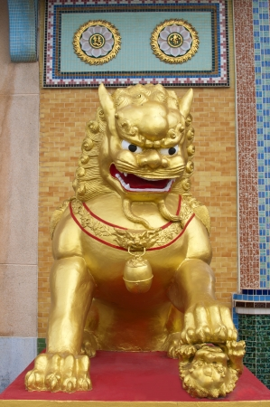 lion gold  in front of chinese temple