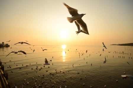 Sea gull sunset photo
