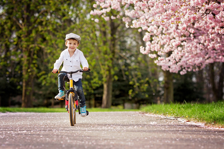 Beautiful portrait of adorable little caucasian boy, riding a bike on an alley in a cherry blossom tree garden, late spring afternoon Imagens