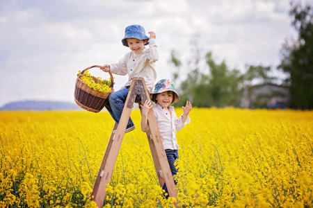 ladder: Happy little boys, sitting on a wooden ladder in yellow rape field on sunny spring day, holding basket full of flowers