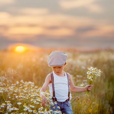 Beautiful little boy in daisy field on sunset, summertime