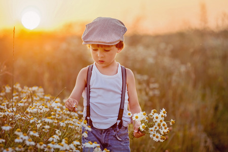flowers field: Beautiful little boy in daisy field on sunset, summertime