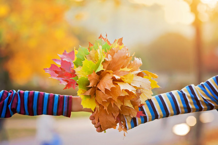 Bouquet of autumn red and orange maple leaves in child hand on a sunny autumn day Archivio Fotografico