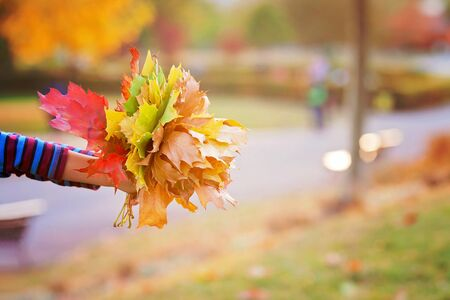 autumn in the park: Bouquet of autumn red and orange maple leaves in child hand on a sunny autumn day Stock Photo