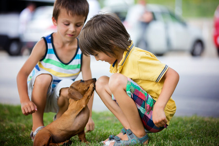 Two beautiful preshcool children, boy brothers, playing with little pet dog in the park, summertime Stock Photo