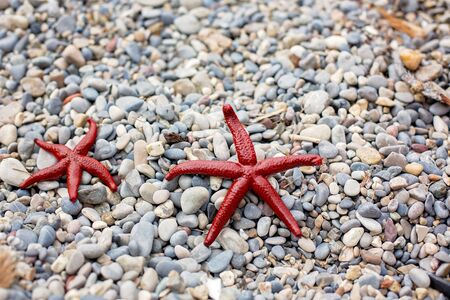 plankton: Young child, holding red starfishes in his hands on the beach, summertime
