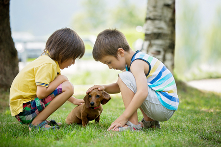 Two beautiful preschool children, boy brothers, playing with little pet dog in the park, summertime Stock Photo