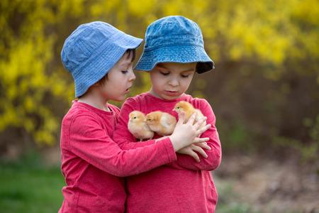 Leuke lieve kleine kinderen, voorschoolse jongens, spelen met kleine kuikens in het park, baby kuikens in handen van het kind