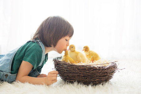Cute little child, boy with ducklings springtime, playing together, giving him a kiss, little friend, childhood happiness