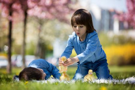 arbol de pascua: cute los niños pequeños, hermanos, niño jugando con los patos de la primavera, en conjunto, pequeño amigo, la felicidad de la infancia
