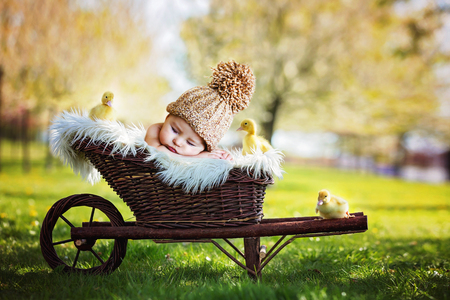 Beautiful little baby boy, sleeping with three little ducklings in a cart, outdoors image in the park, springtime