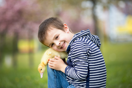 Cute sweet child, boy, playing in the park with ducklings, springtime Stock Photo