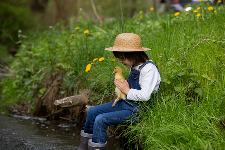 Preschool child, boy, playing on little river with ducklings, letting the duckling swimming for the first time. Childhood concept